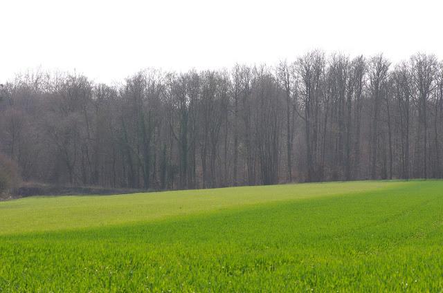Les Hautes-Lisières (Rouvres, 28), 22 mars 2012. Photo : J.-M. Gayman