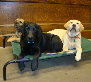 Navy on the cot with her friends Banks and Brinkley