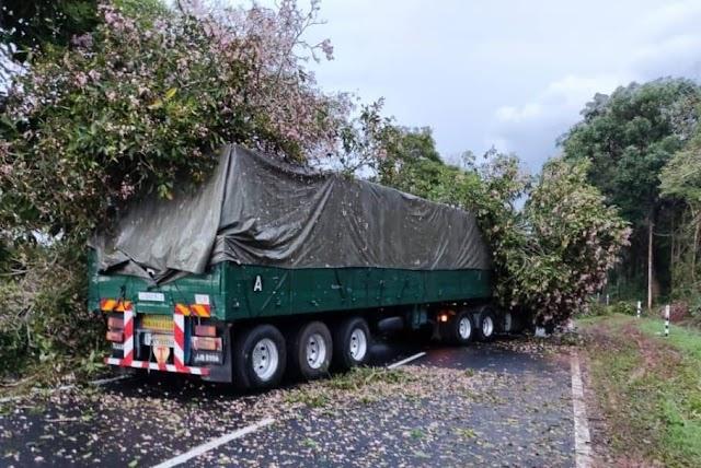 Pokok tumbang hempap treler