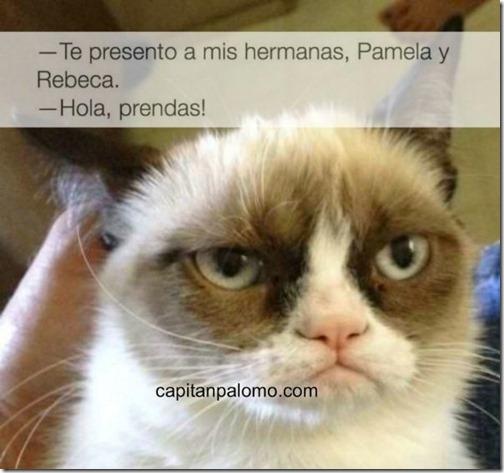meme del gato gruñon (11)