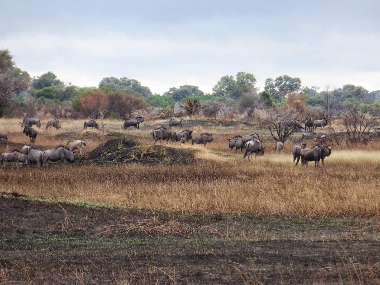 tijdens een wandeling door de Okavangodelta
