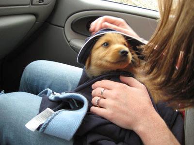 Albie the super pup!