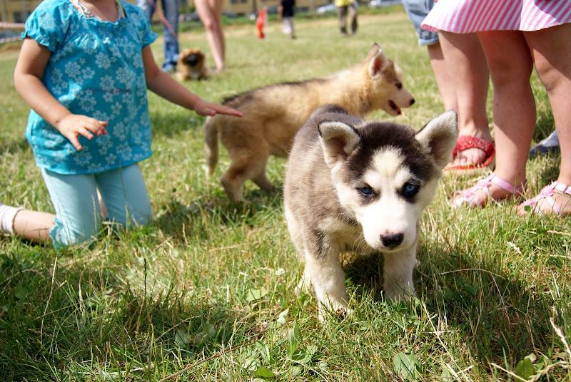 Wystawa psów - dsc00384.jpg