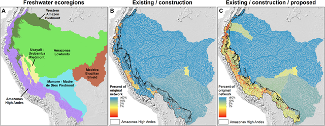 Fragmentation of Andes-to-Amazon connectivity by hydropower dams. (A) Freshwater ecoregions of the Andean Amazon (20), where most existing and proposed dams are concentrated in the Amazonas High Andes ecoregion. (B and C) Fragmentation for individual sub-basins under two scenarios: (B) dams existing and under construction and (C) all dams existing, under construction, and proposed. Color gradation from blue to red denotes increasing fragmentation, represented by decreasing total length of the individual river network. That is, fragmentation is increasing as rivers go from blue (big, connected river networks) to red (small, isolated river networks). Graphic: Anderson, et al., 2018 / Science Advances