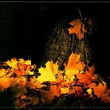 1979 г. Осень в лесопарке