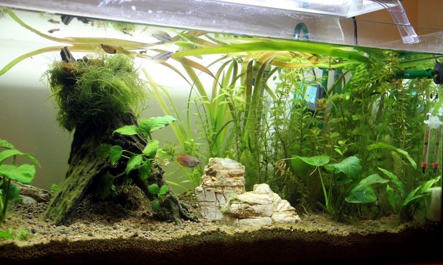 Ayuda con el dise o de mi acuario portalpez acuarios for Disenos de acuarios