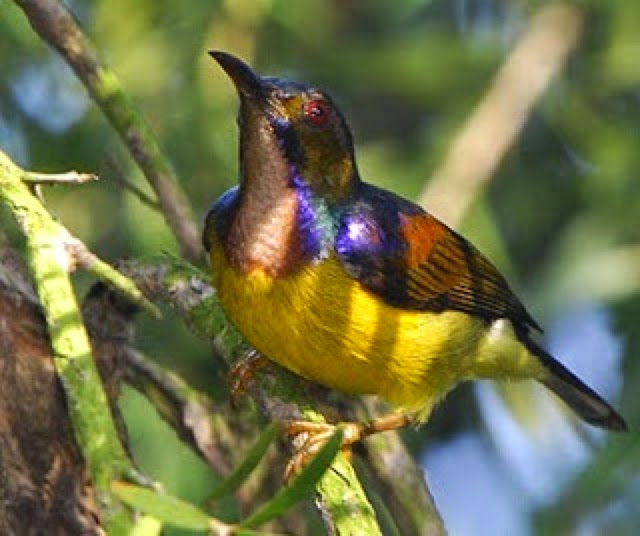 Burung-burung Yang Indah Nan Menawan: Burung Burung Kecil