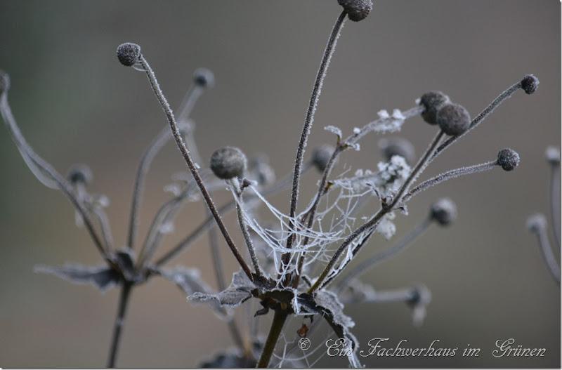 Ein Wintermärchen in unserem Garten