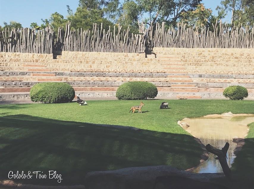 Exhibiciones aves y mamiferos en Bioparc Valencia
