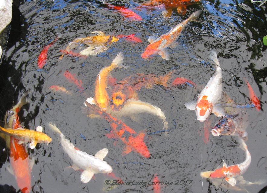 [05-08-fish%5B5%5D]
