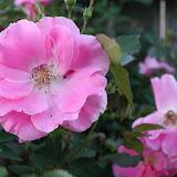 Gardening 2012 - IMG_2728.JPG