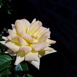 Gardening 2014 - 116_1562.JPG