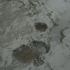 Piedra corroida por la fauna marina
