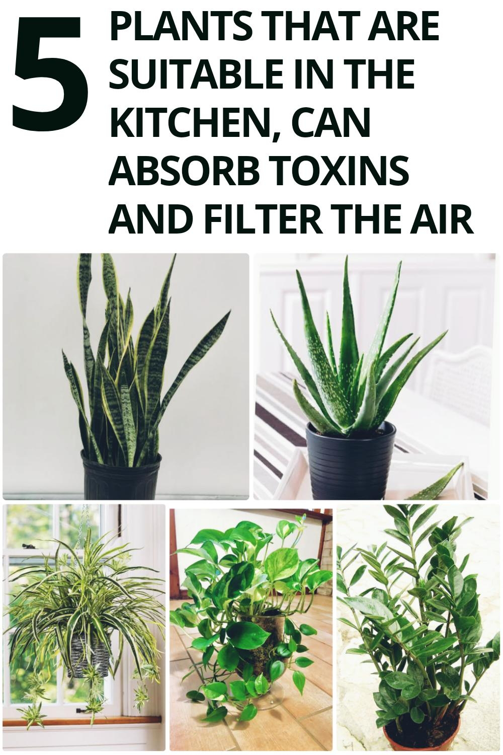 5 Plants That Are Suitable in The Kitchen, Can Absorb Toxins And Filter The Air