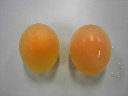 huevo-que-rebota