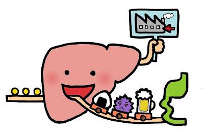 肝臓500×343.jpg