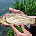 20140510_Fishing_Stara_Moshchanytsia_018.jpg