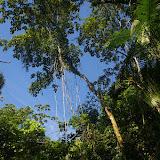 La forêt dans la Fazenda d'Arariba (Ubatuba, SP), 22 février 2011. Photo : J.-M. Gayman
