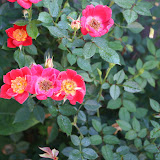 Gardening 2012 - IMG_3120.JPG
