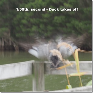 Slow speed moving duck -> blur