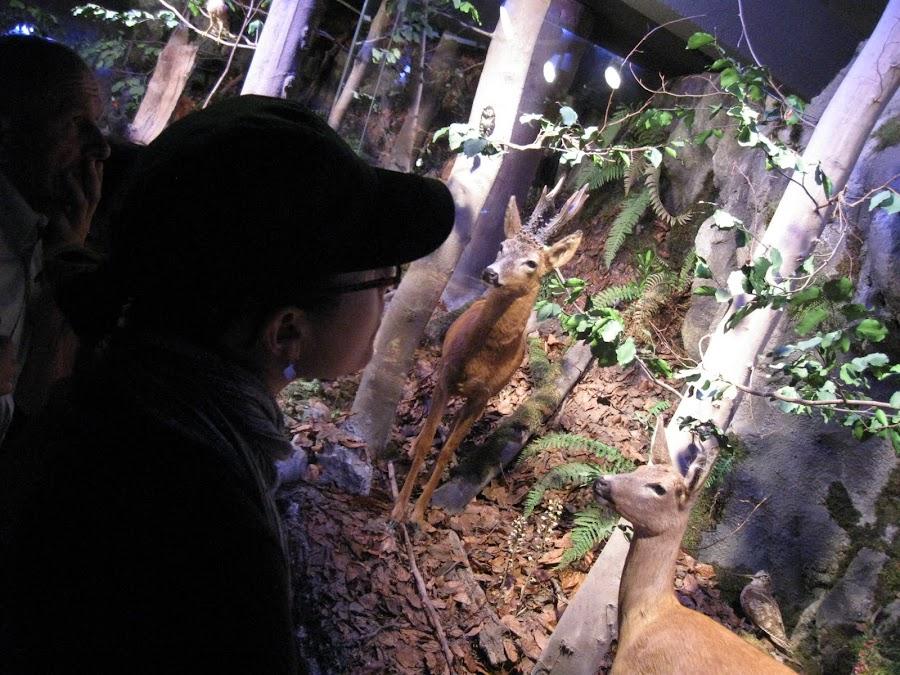 Podziwianie martwej fauny w muzeum