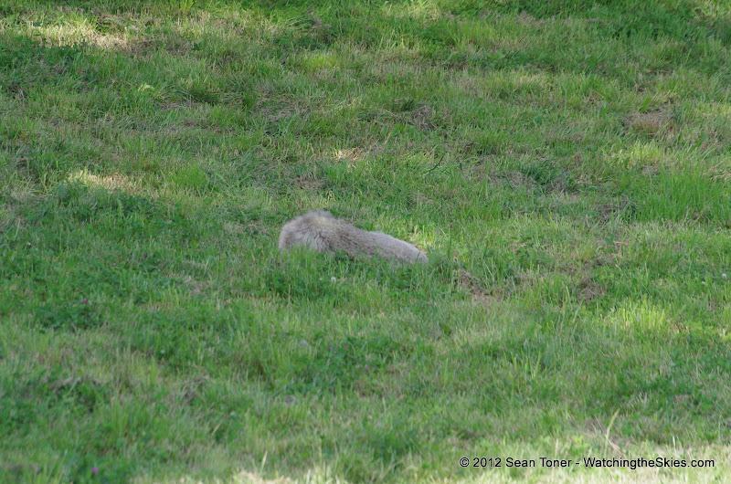 05-11-12 Wildlife Prairie State Park IL - IMGP1570.JPG