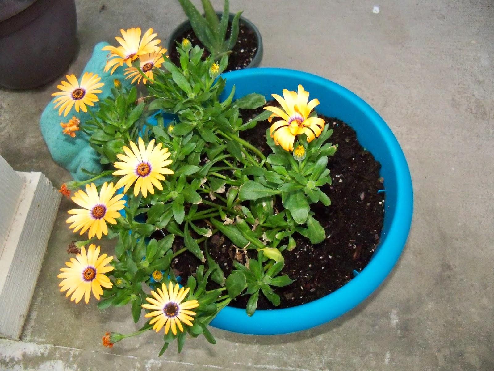 Gardening 2015 - 116_7625.JPG