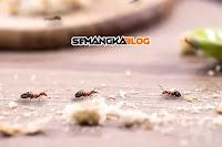 8 Cara Ampuh Membasmi Semut Dengan Bahan Sederhana