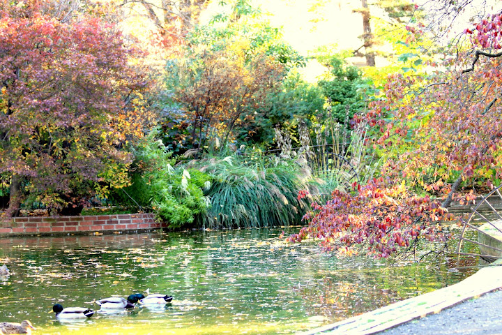 Duck Pond in Snug Harbor Staten Island in the fall