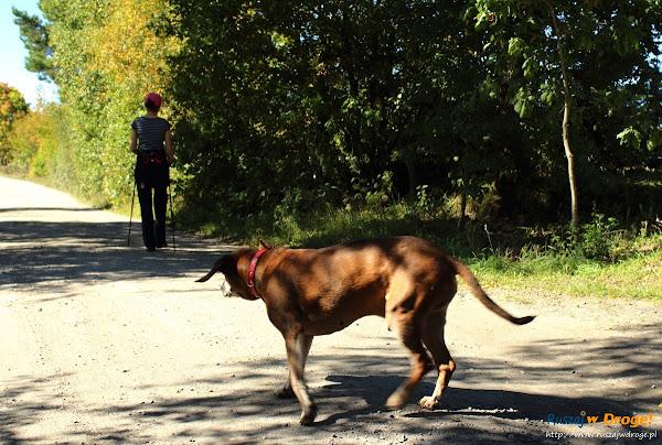 Trasy Nordic Walking w Pomieczynie - psiak z bazy wypadowej Hejtus