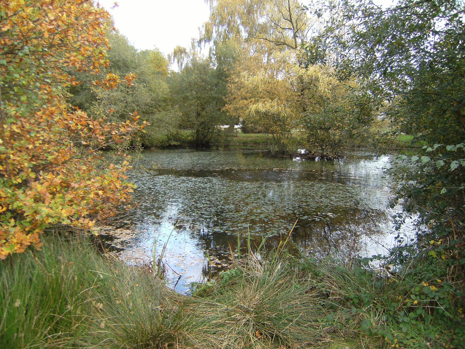 DSCF2264 Eversley Cross village pond