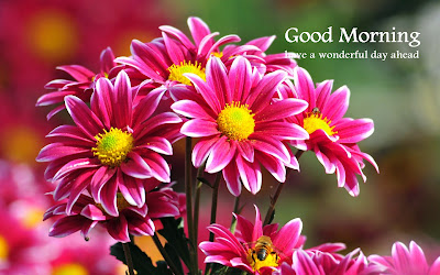 Good Morning Wise With Beautiful Flower