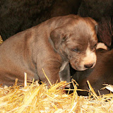 Star & True Blues February 21, 2008 Litter - HPIM0987.JPG