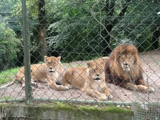2016.07.31-057 lions