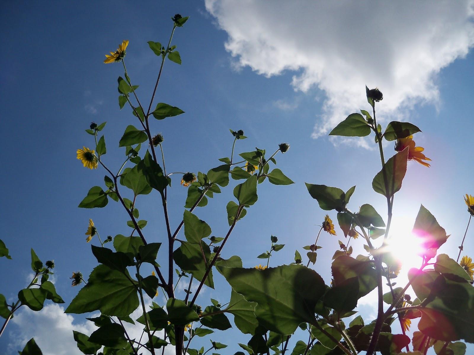 Gardening 2012 - 115_2855.JPG