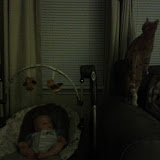 Kitteh - IMG_20120625_205637.jpg