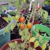 Gardening 2010, Part Two - 101_2078.JPG