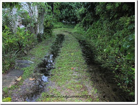10-29-driveway-philippe-rain
