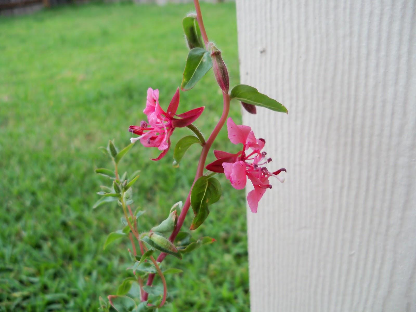 Gardening 2010, Part Two - 101_2430.JPG