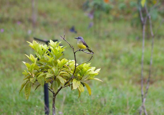 Piste de Coralie (Guyane) : l'ancien site d'orpaillage. 26 novembre 2011. Photo : J.-M. Gayman