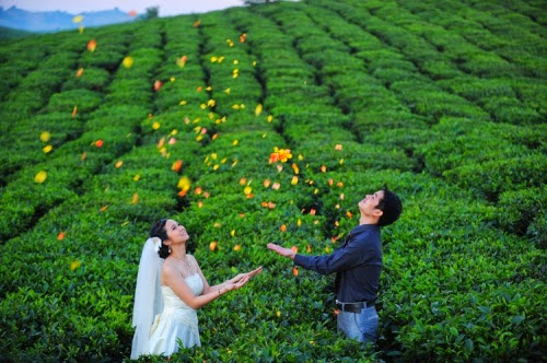 29 001 Thơ mộng ảnh cưới nơi Mộc Châu