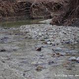 01-05-13 Arbor Hills Nature Preserve - IMGP3982.JPG