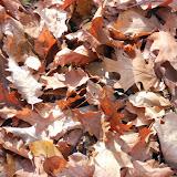 SingiDigital 28.12.2011 - 25.jpg