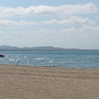 El mar, la pesca y las aves