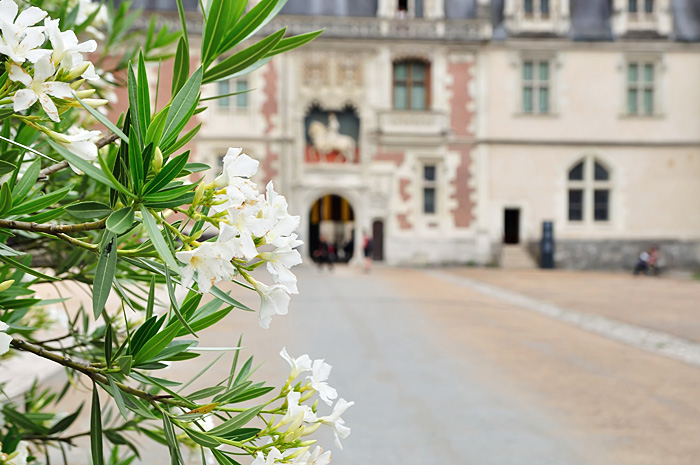 Blois03.jpg