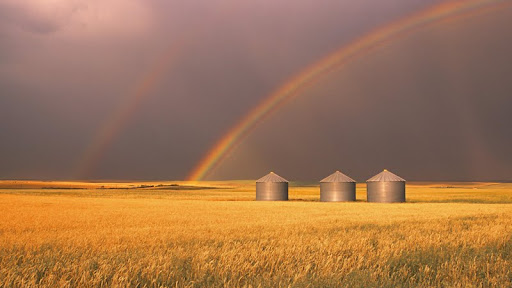 Harvesting Rainbows, Alberta, Canada.jpg