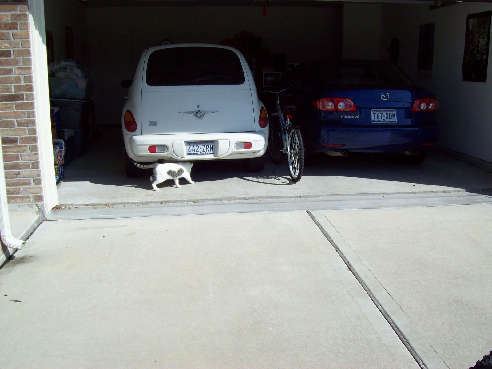 Ghost Cat Cometh - 101_5870.JPG