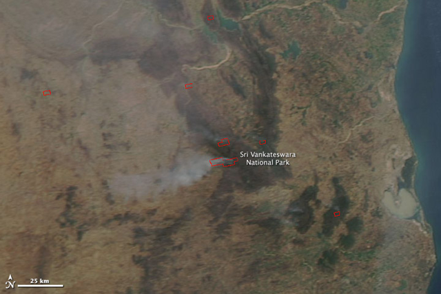 A large fire was burning in India's Sri Venkateshwara National Park on 24 March 2014, when the Moderate Resolution Imaging Spectroradiometer (MODIS) on NASA's Aqua satellite acquired this image. The fires are outlined in red. The park consists of dry deciduous forest, and is home to a wide range of rare wildlife, including tigers and the golden gecko. The protected forested land is dark green in contrast to the surrounding tan landscape. Photo:  LANCE/EOSDIS MODIS Rapid Response Team / NASA GSFC