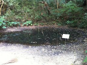 艦砲射撃で出来た穴が池に