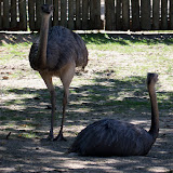 Houston Zoo - 116_8434.JPG